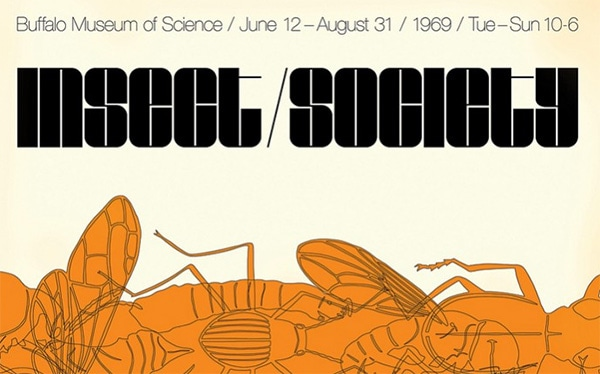Insect Society